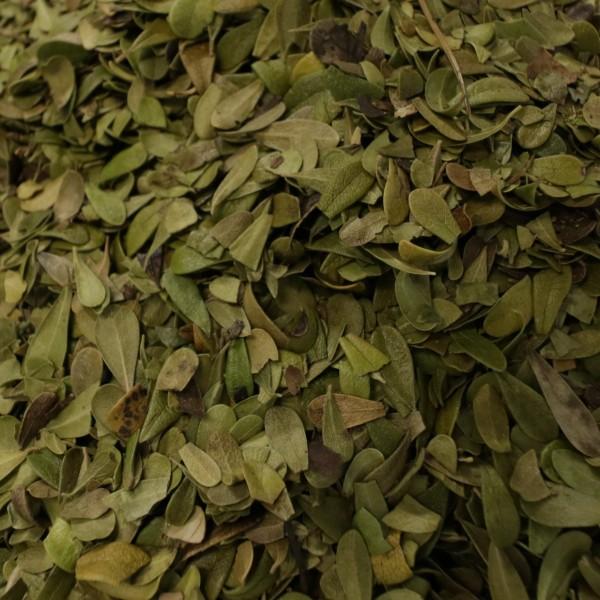 Bärentraubenblätter - Uvae ursi folium