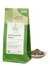 Salus Spitzwegerichblätter Tee